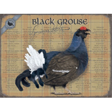 Black Grouse-  Small (150 x 200mm) Metal Sign -
